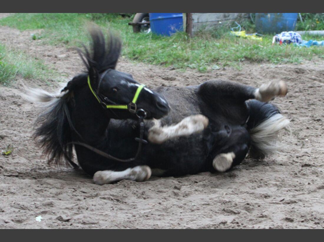 CAV Pferde wälzen Leserfotos 33