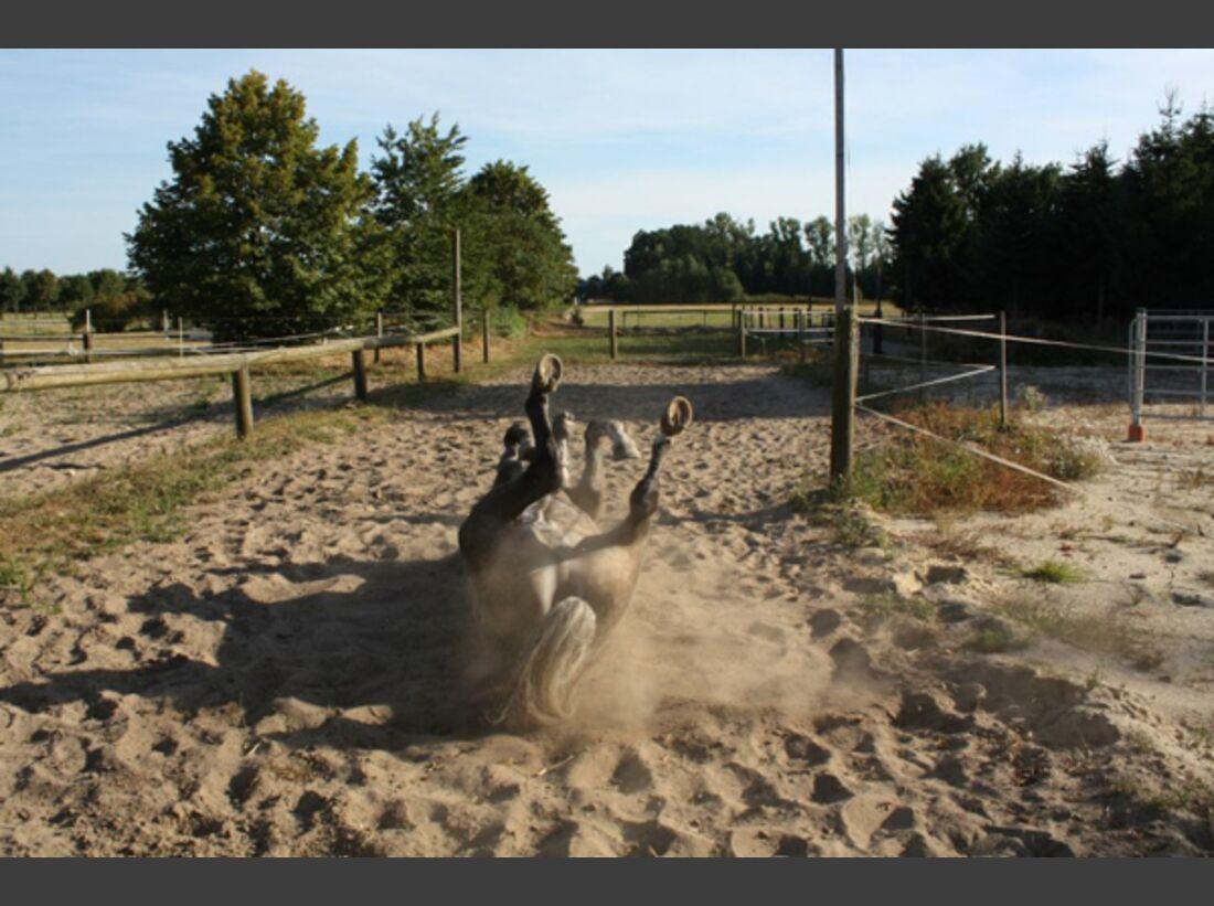 CAV Pferde wälzen Leserfotos 36