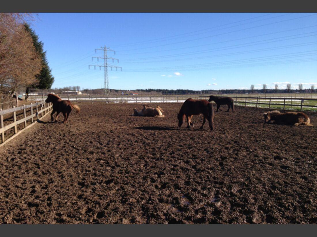 CAV Pferde wälzen Leserfotos 54