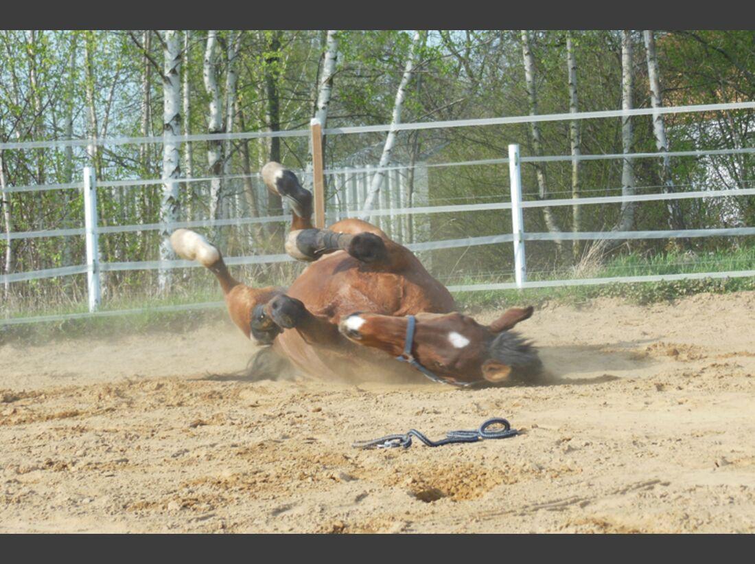 CAV-Pferde-wälzen-Leserfotos-Lisa-Laschet