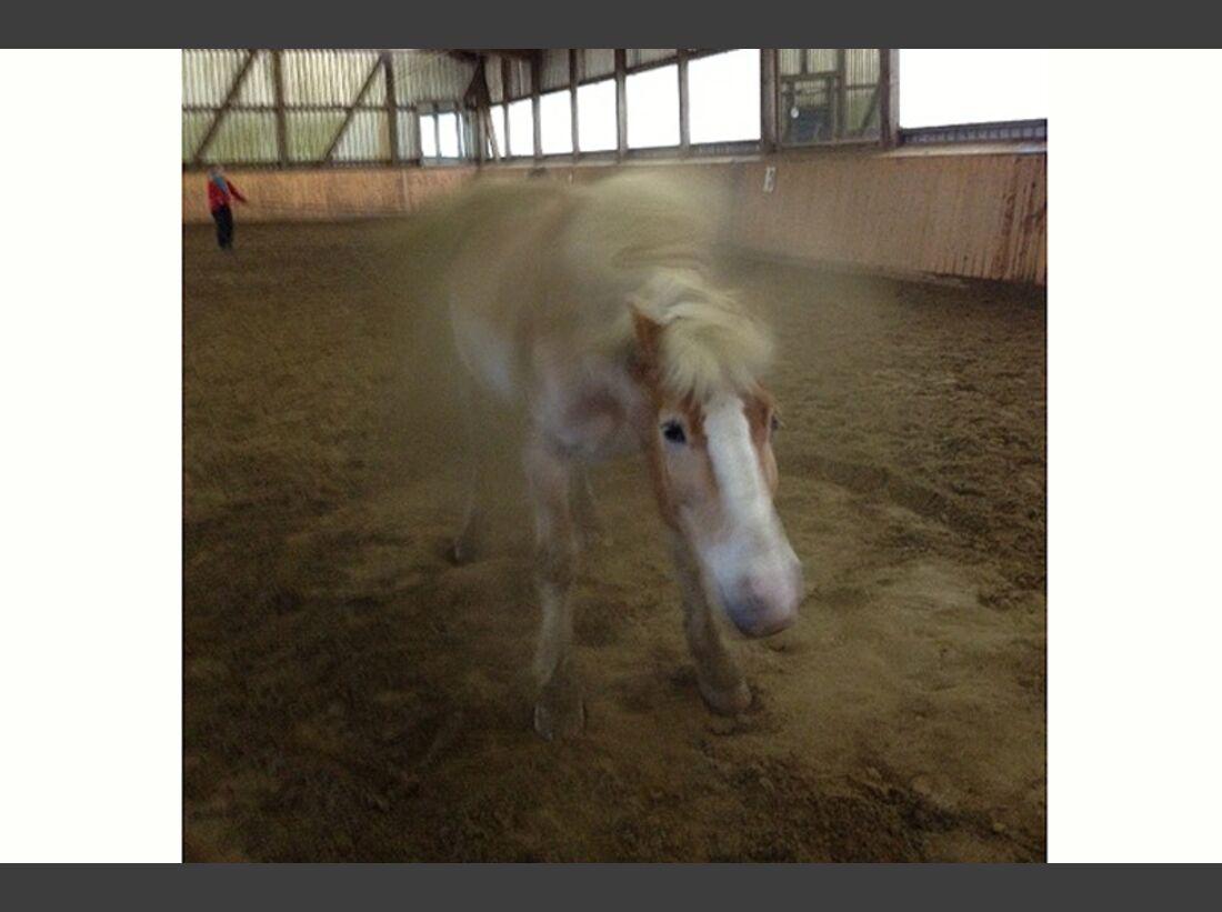 CAV-Pferde-wälzen-Leserfotos-Vanessa-Kirst