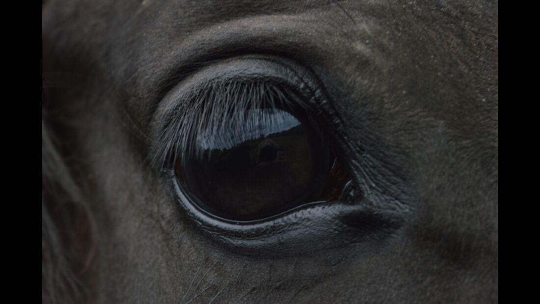 CAV Pferdeaugen 3