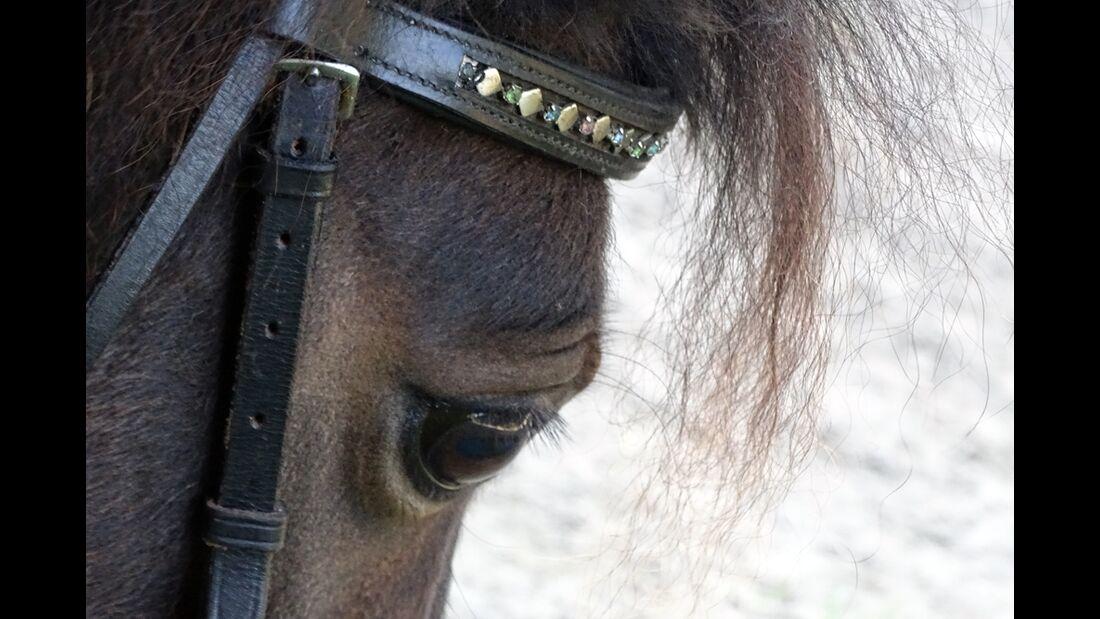 CAV Pferdeaugen Alina Ustermann