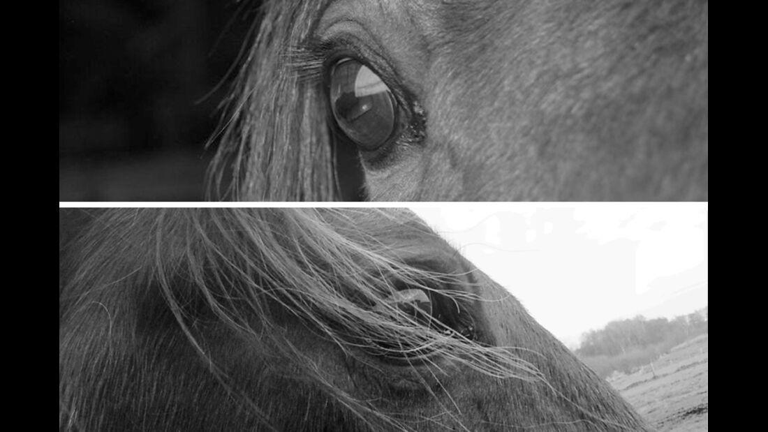 CAV Pferdeaugen Anja Kröger