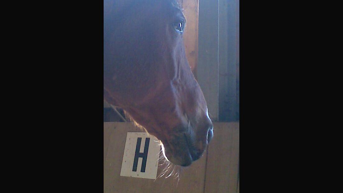 CAV Pferdeaugen Augen Araber MS_37