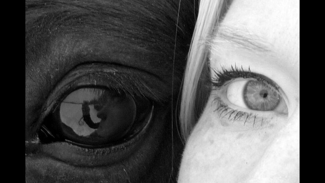 CAV Pferdeaugen Augen Araber MS_56