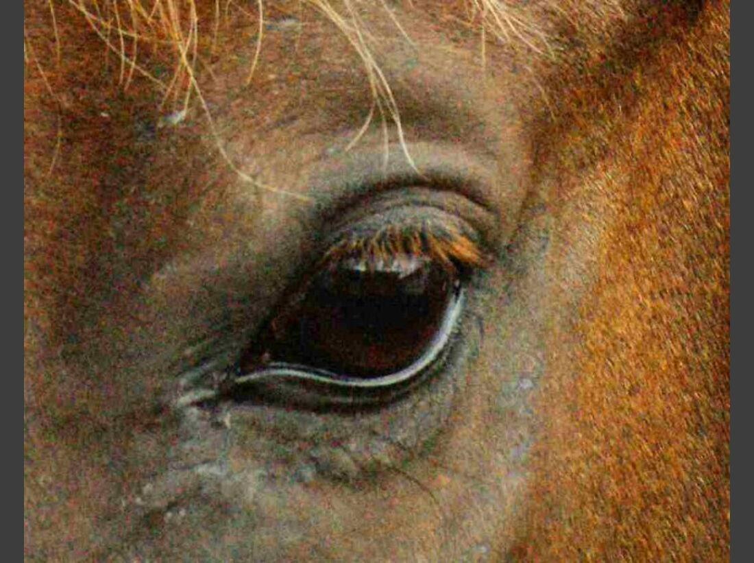 CAV Pferdeaugen Augen Araber MS_58