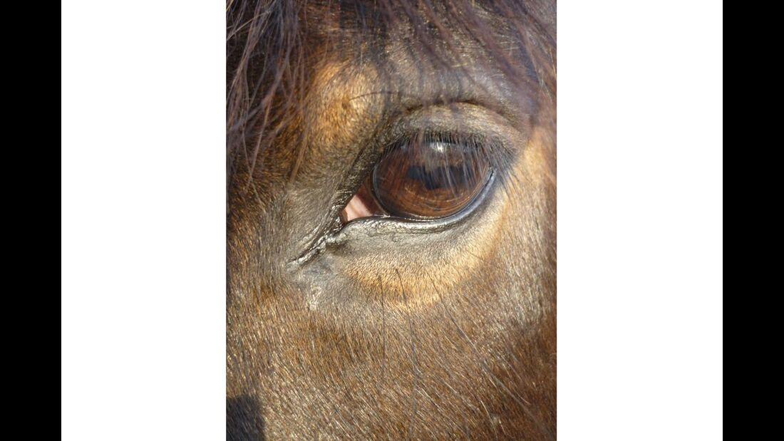 CAV Pferdeaugen Augen Celina Karnarski