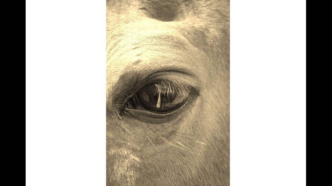 CAV Pferdeaugen Augen Christina Goeggelmann