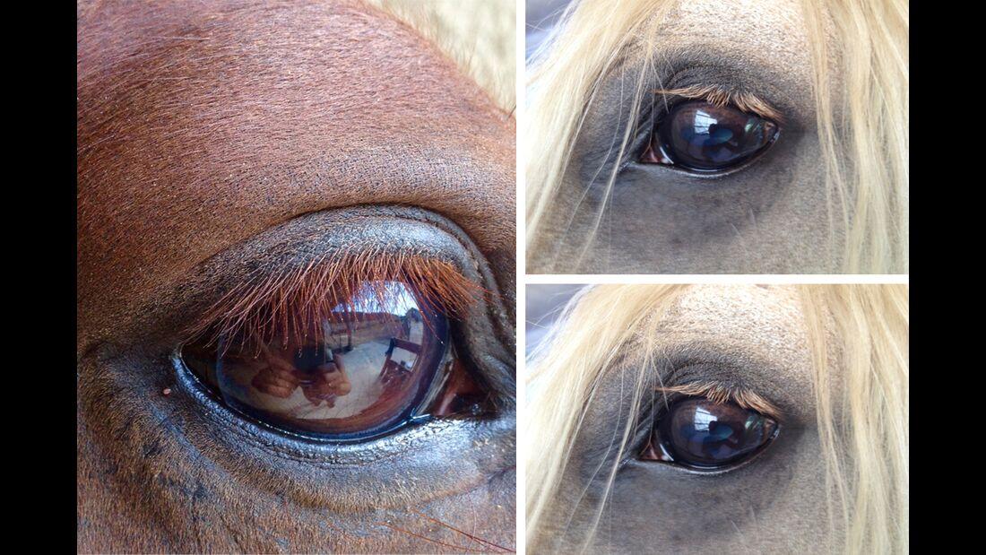 CAV Pferdeaugen Augen Claudia Schütze