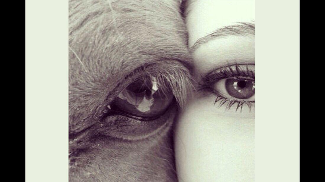 CAV Pferdeaugen Augen Daniela Berger-Gruttke