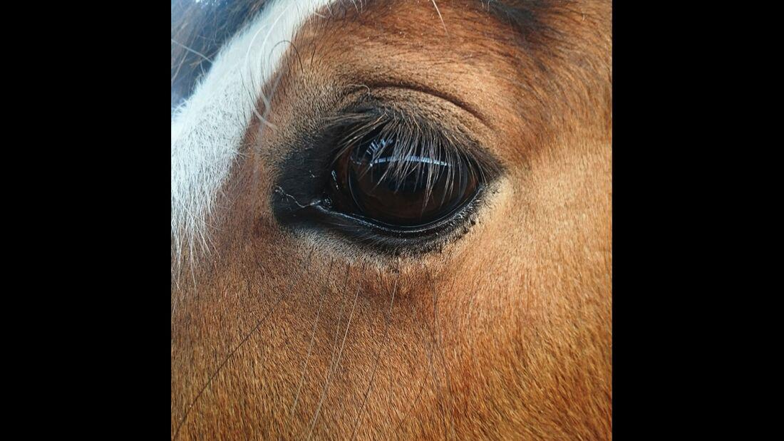 CAV Pferdeaugen Augen Daniela Weller