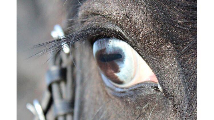 Aussehen blindes auge Blinde mit