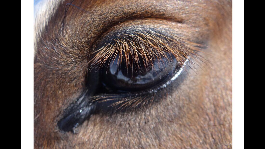 CAV Pferdeaugen Augen Elke Rosewich