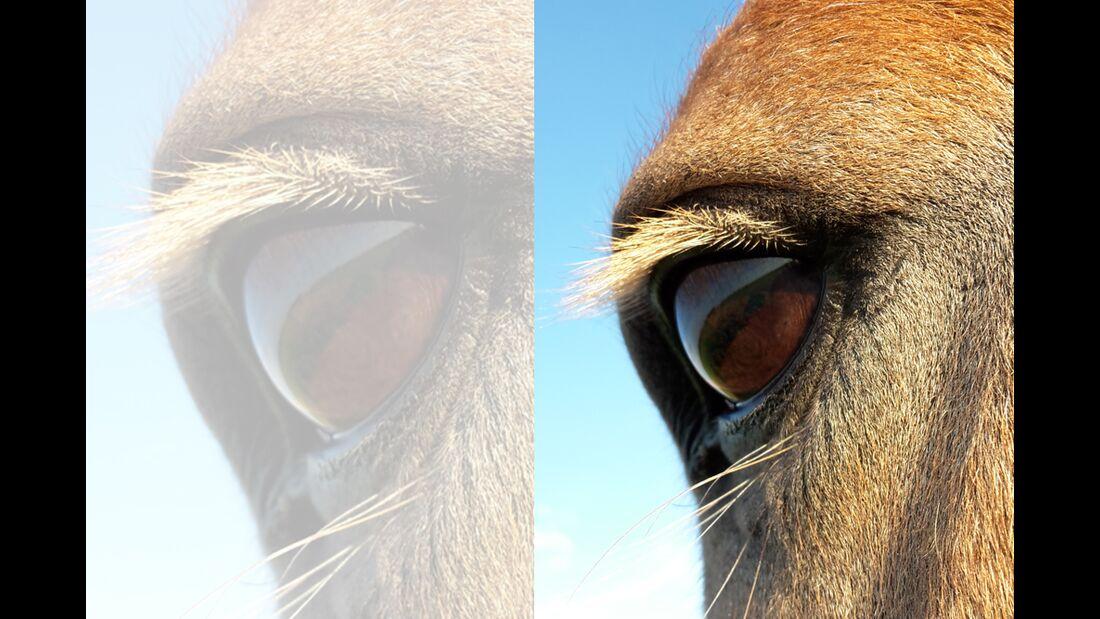 CAV Pferdeaugen Augen Hannah Steiner