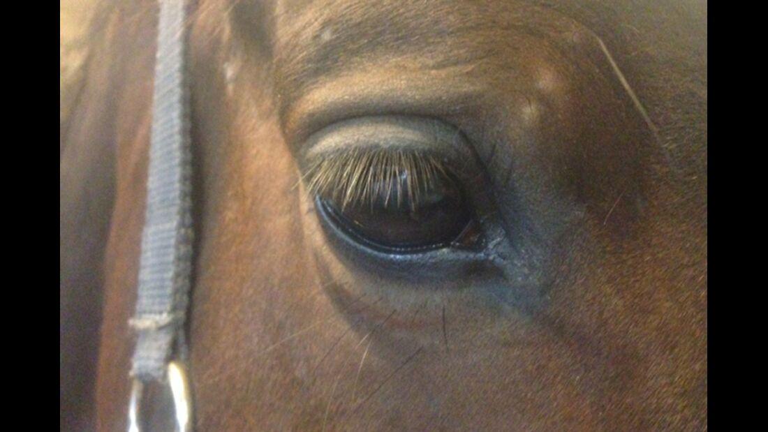 CAV Pferdeaugen Augen Jasmin Kalkbrenner