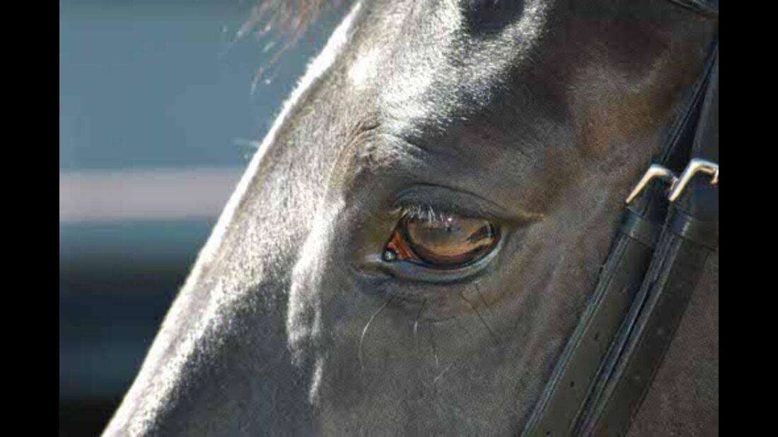CAV Pferdeaugen Augen Liebe Stute MS