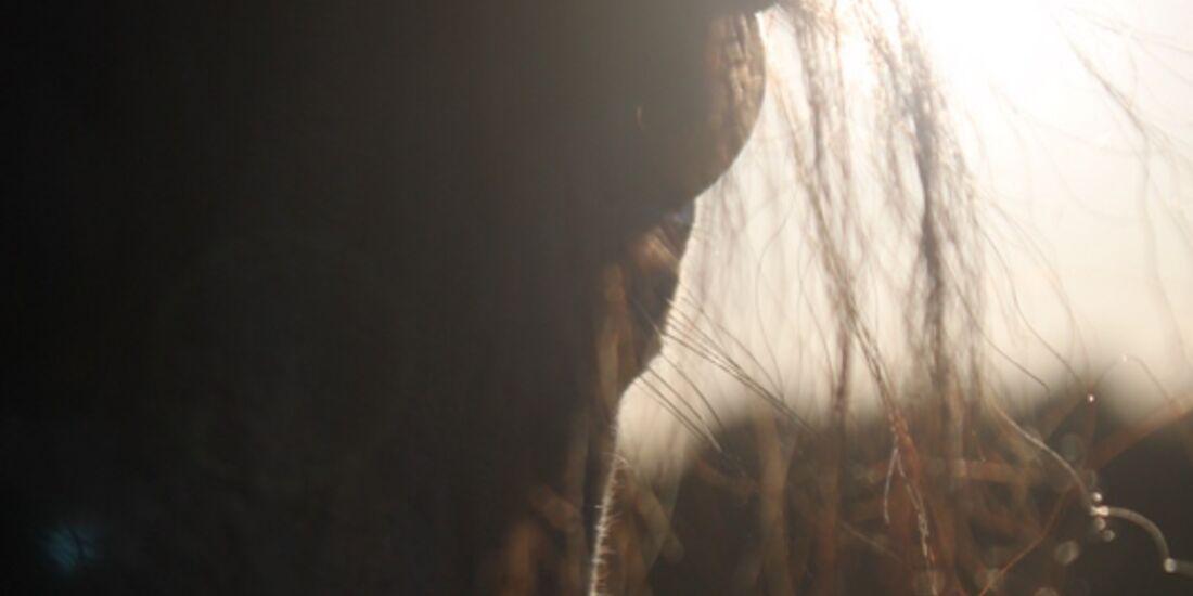 CAV Pferdeaugen Augen Lusitano MS _14