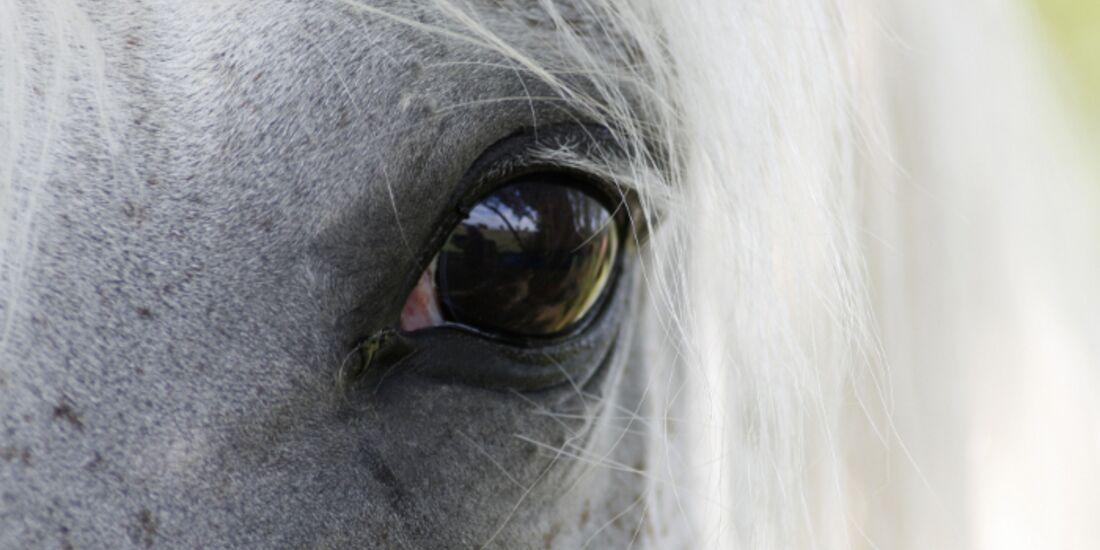 CAV Pferdeaugen Augen  MS_34