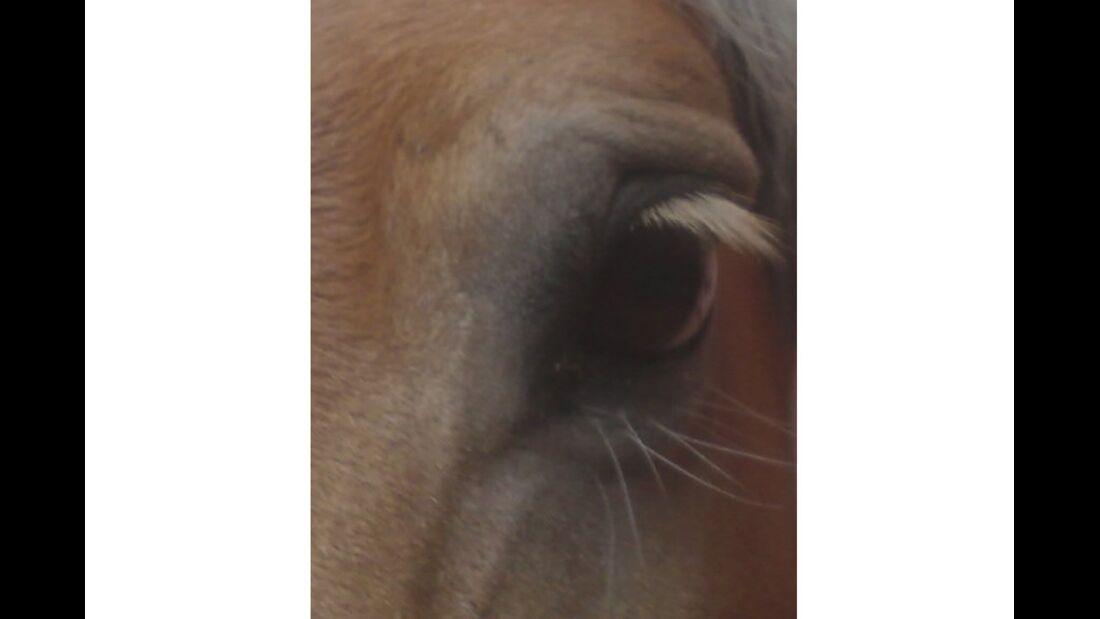 CAV Pferdeaugen Augen MS Lena Thomas