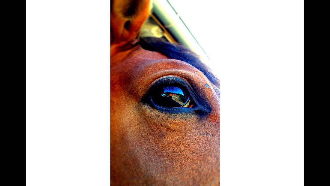 CAV Pferdeaugen Augen Ruth Portmann