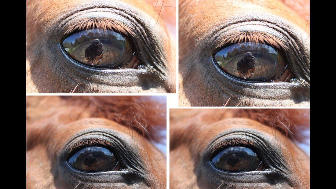 CAV Pferdeaugen Augen Sonja Oelschlägel