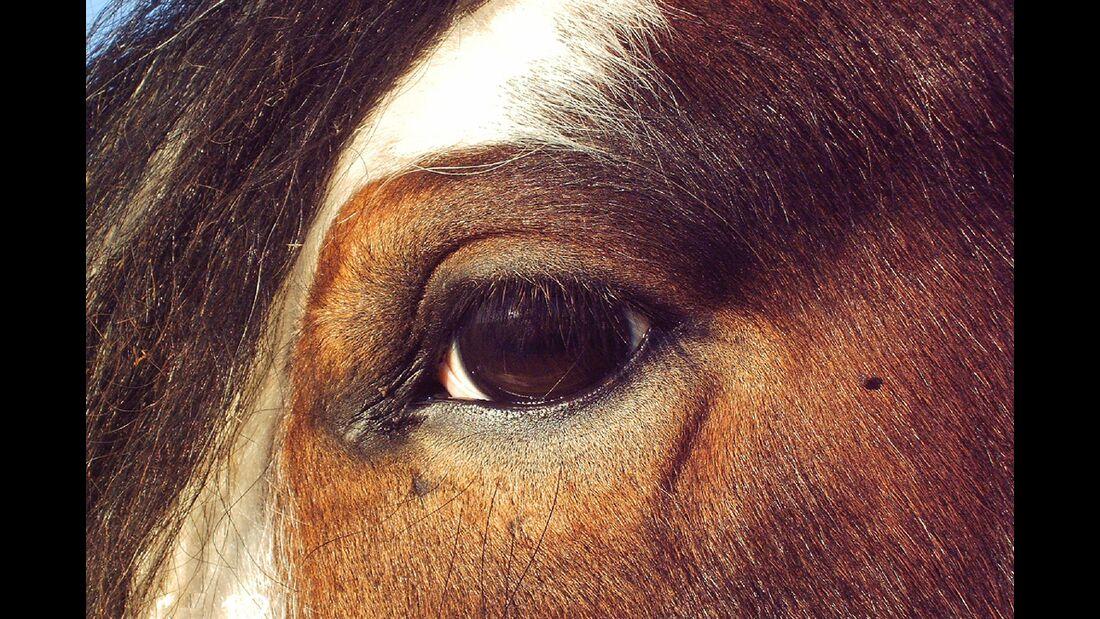 CAV Pferdeaugen Carina Rausch