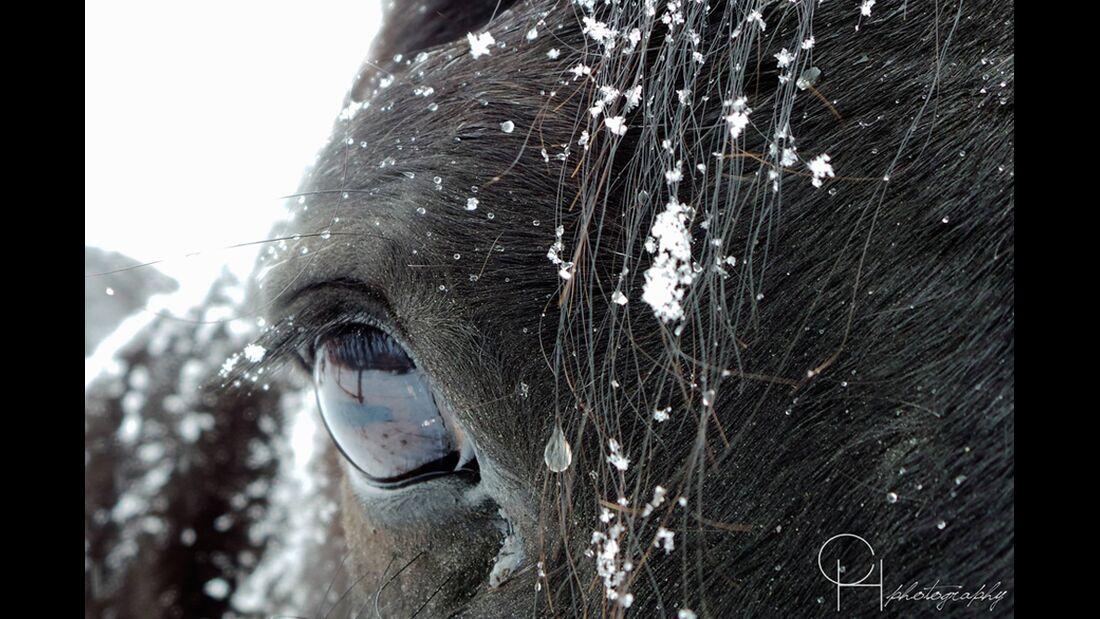 CAV Pferdeaugen Carola