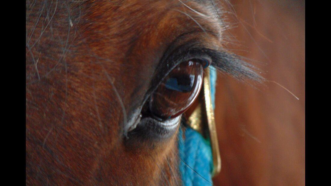 CAV Pferdeaugen Carolin Seguda