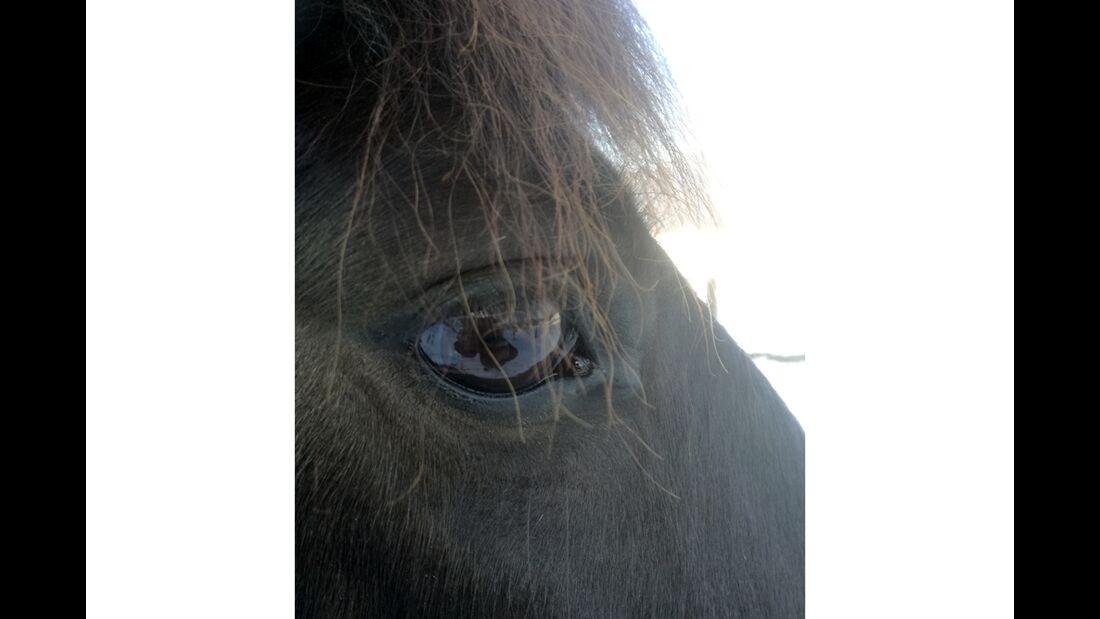 CAV Pferdeaugen Christina Oberegger