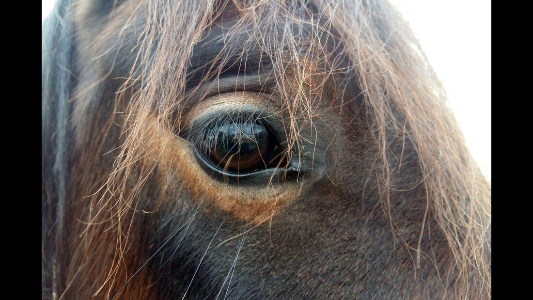 CAV Pferdeaugen Corinna Steinkopf