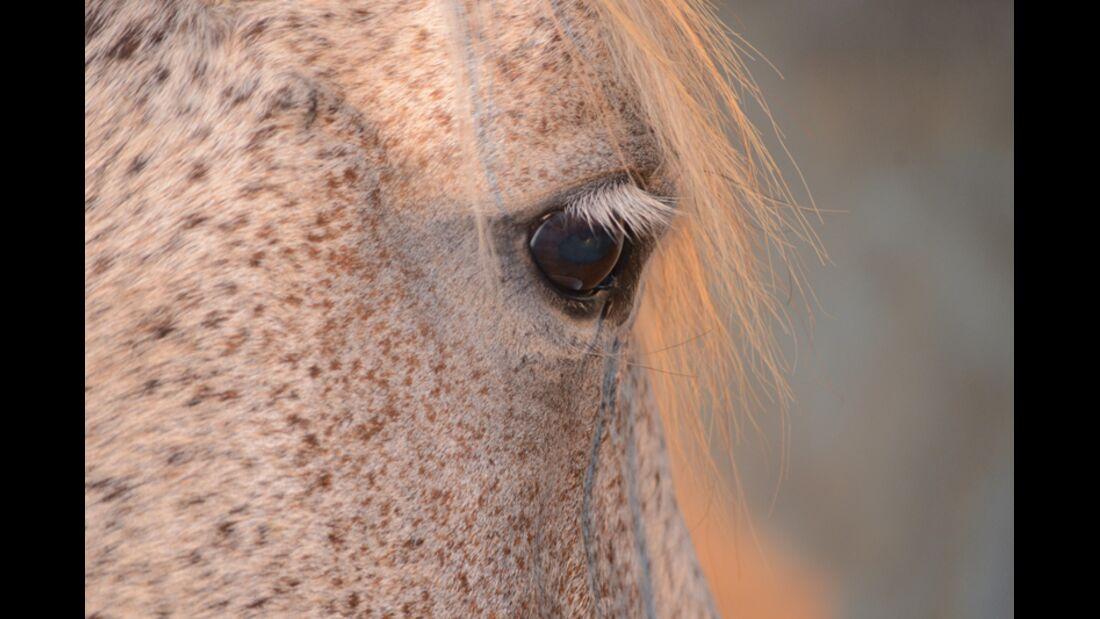 CAV Pferdeaugen Daniela Fürst