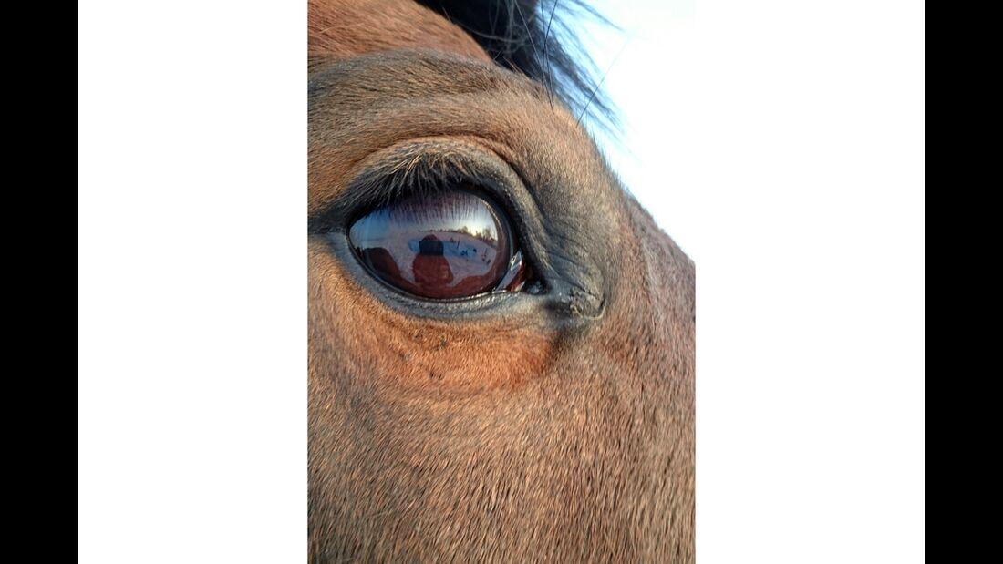 CAV Pferdeaugen Emie