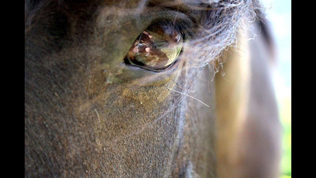 CAV Pferdeaugen Grit Skillandat