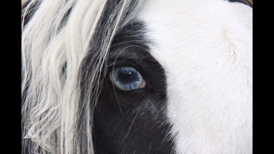 CAV Pferdeaugen Jennifer Bischoff