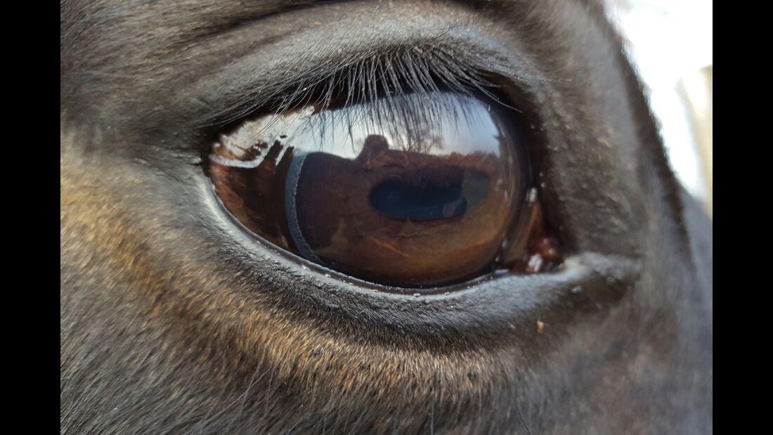 CAV Pferdeaugen Katrin