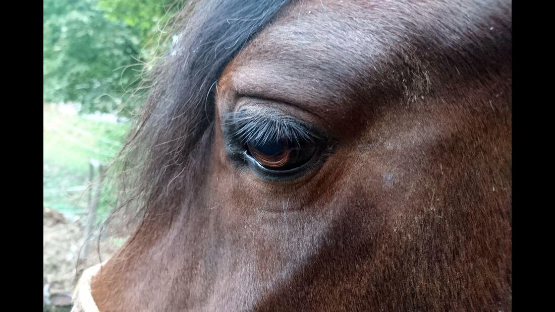 CAV Pferdeaugen Lena Rossa