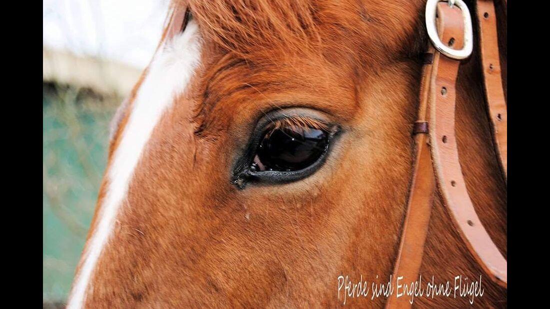 CAV Pferdeaugen Marion Eichhorn