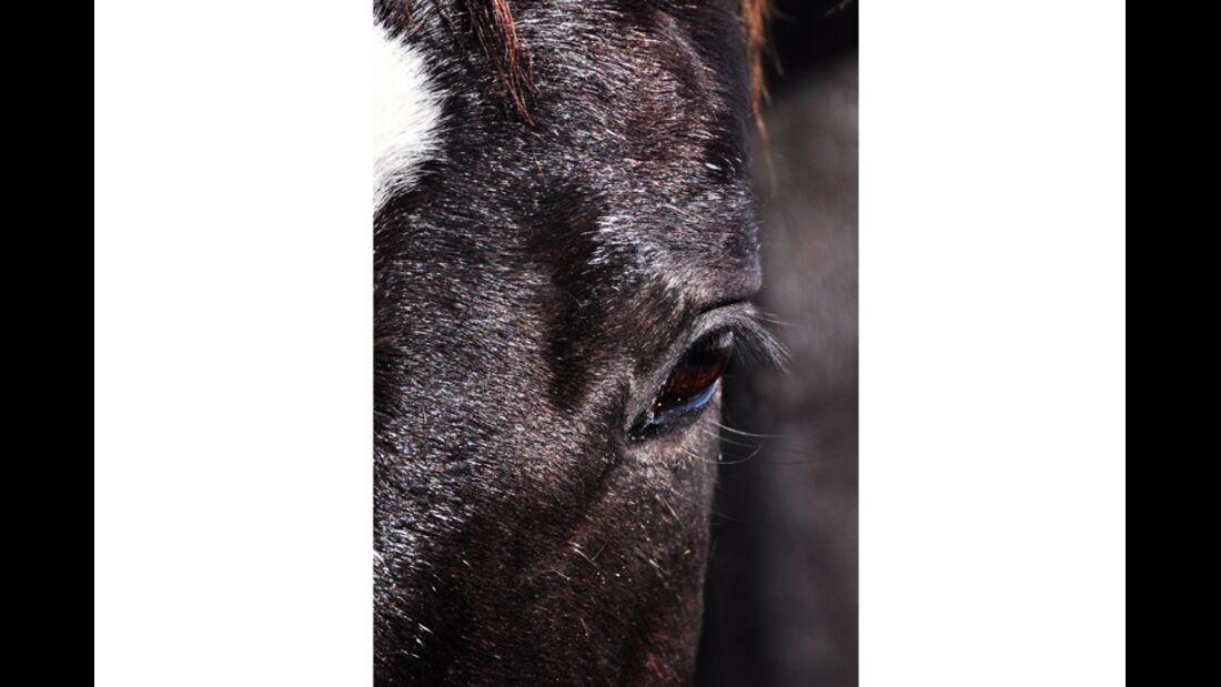 CAV Pferdeaugen Marion Fischer