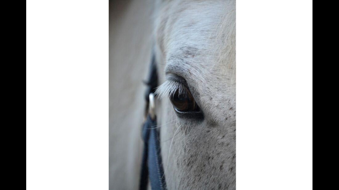 CAV Pferdeaugen Nadine Kinzelmann