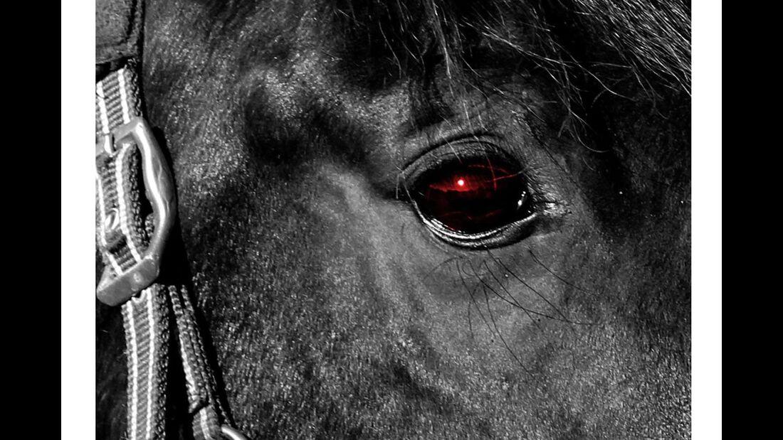 CAV Pferdeaugen Nancy Brünner 1