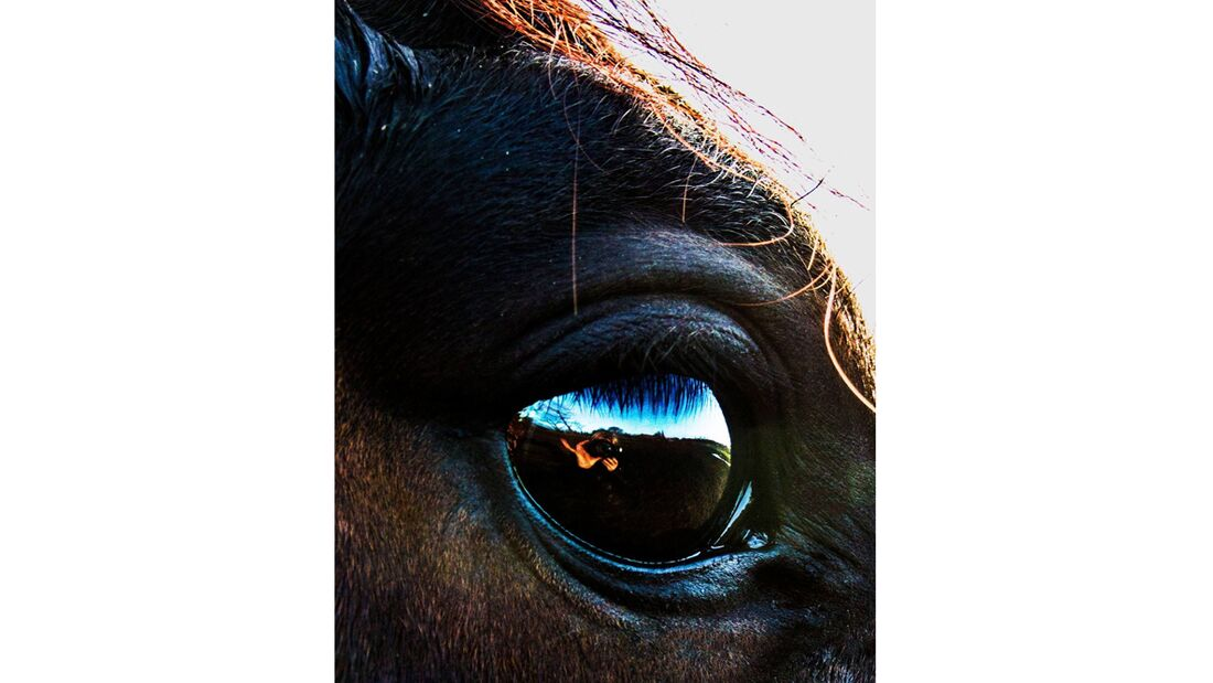 CAV Pferdeaugen Nancy Brünner