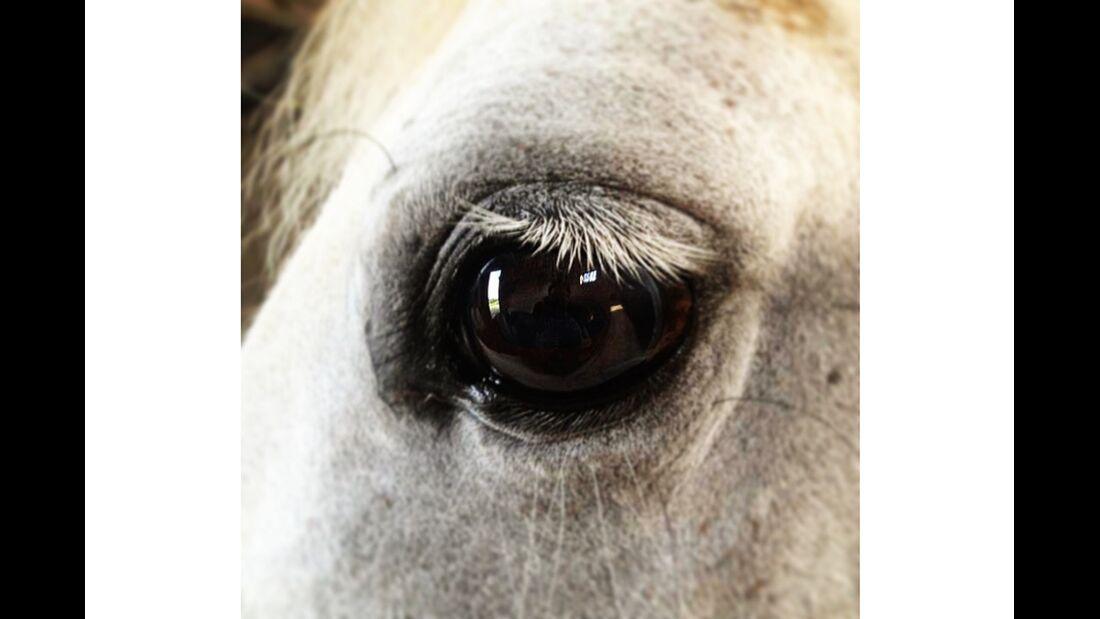 CAV Pferdeaugen Sandra Bussche