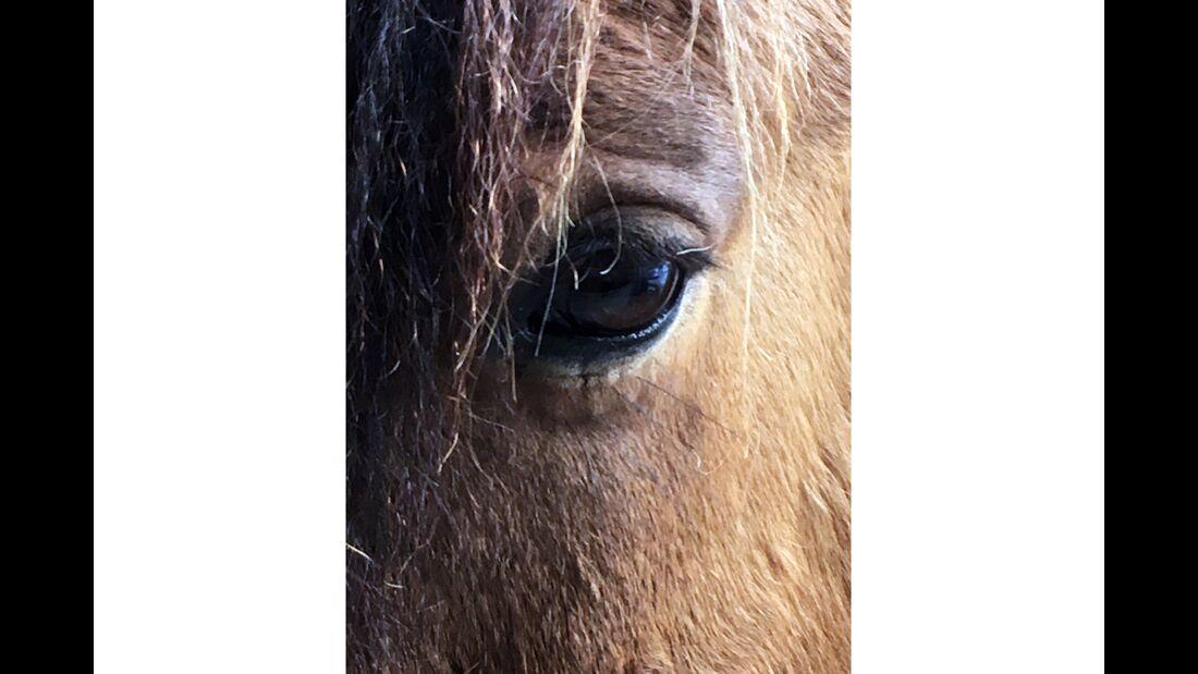 CAV Pferdeaugen Sandra Lusser