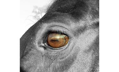 CAV Pferdeaugen Sarah Berge