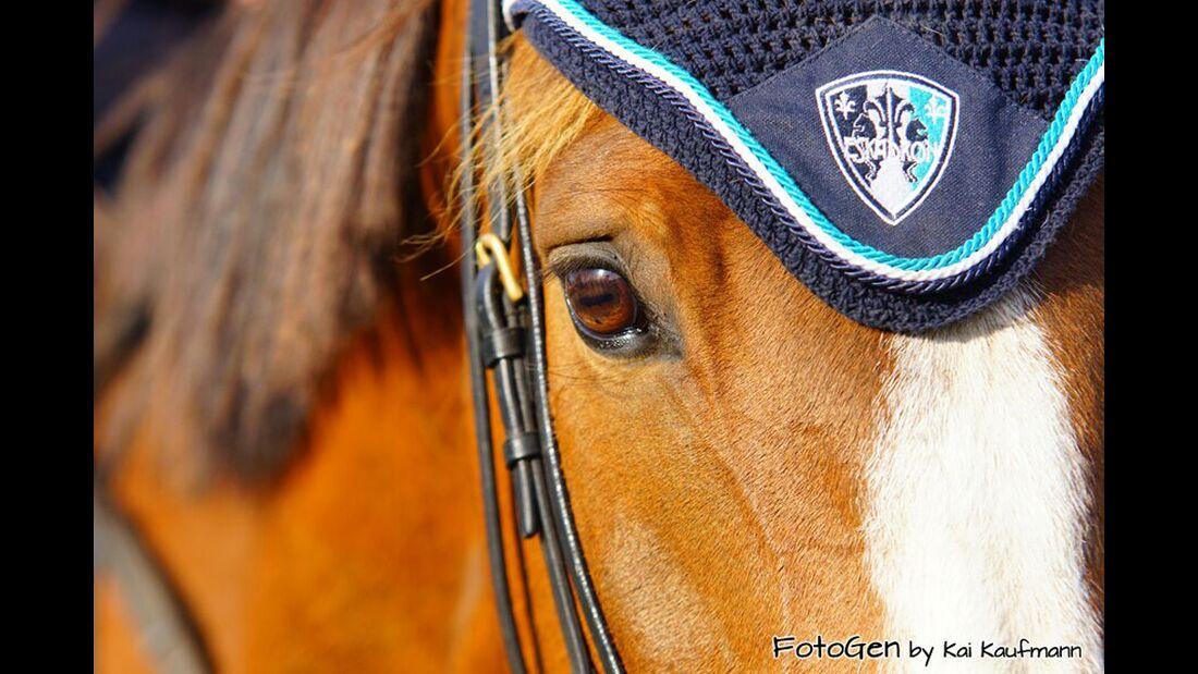 CAV Pferdeaugen Sheila Schäfer 2