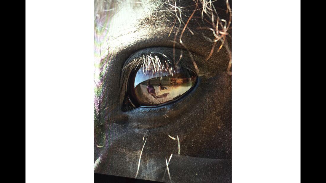 CAV Pferdeaugen Ursula Engler
