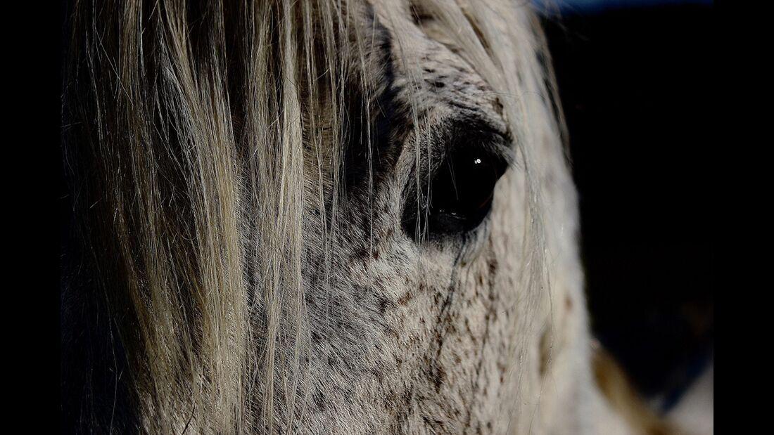 CAV Pferdeaugen Viviane Dittmar