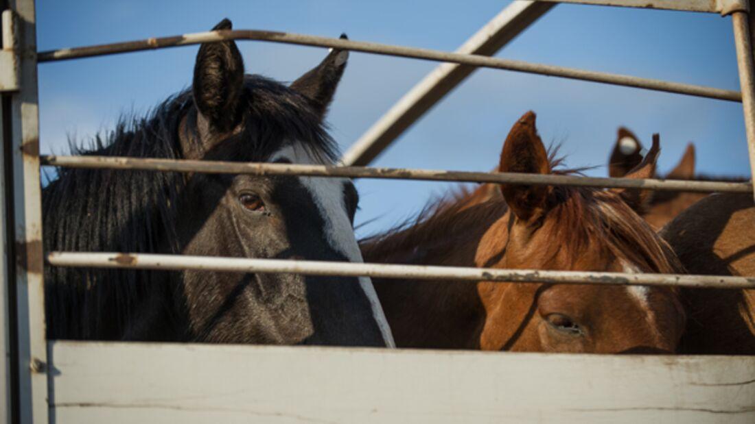CAV Pferdefleisch 1