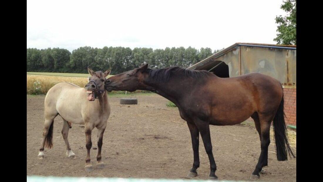 CAV Pferdefotos Weide Paddock Pferd